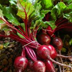 fresh beetroot collected for a salad