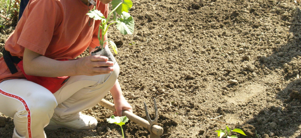 A woman digs a whole in order to place a plant