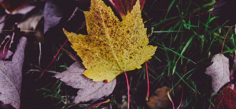 autumn equinox sunshine house blog